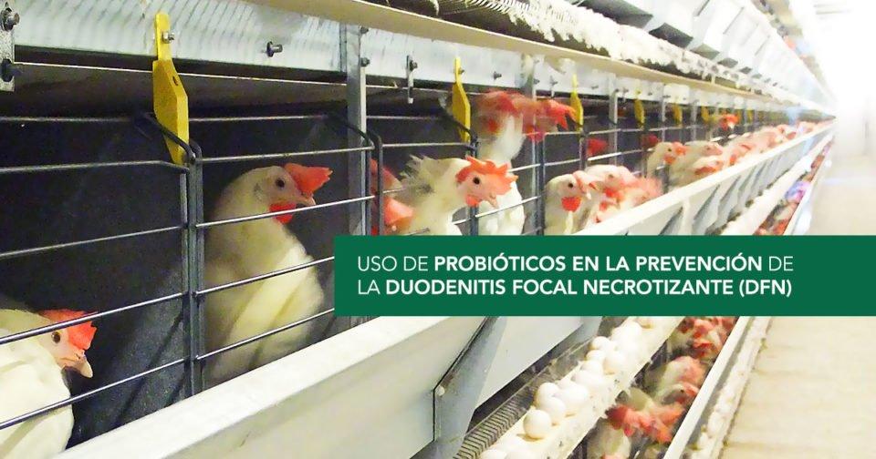 La Duodenitis Focal Necrotizante: cómo esta enfermedad afecta a su negocio